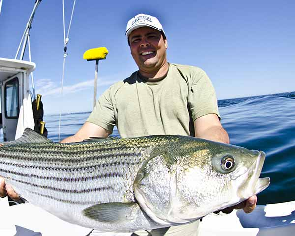 Man with striped bass on a fishing charter